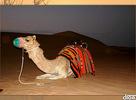 """Moja taka menšia foto dokumentácia z dovolenky zo Spojených Arabských Emirátov. Môžete vidieť miesto kde som býval, výlet v Dubaji a offroad na púšti. Čo k tomu dodať, treba absolvovať častejšie....hlavne s """"Drom.sk Crew""""...click_!"""